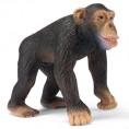 Cimpanzeu mascul